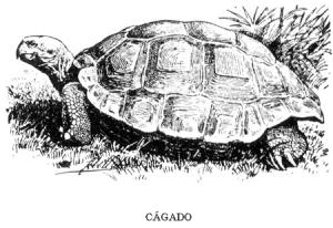CAGADO