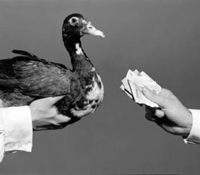 Pagar o pato – Por dentro da Língua Portuguesa